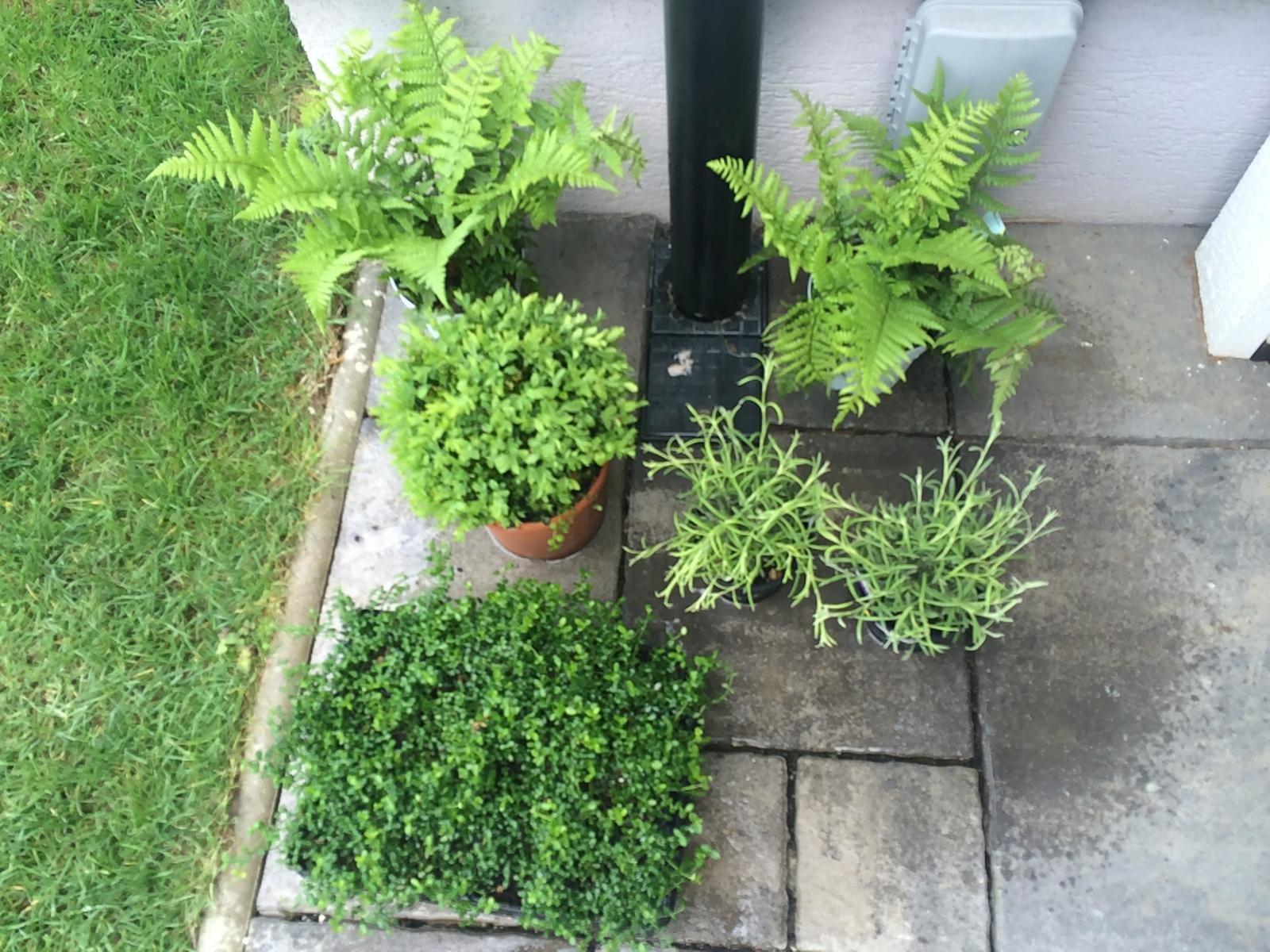 Zahradka - Čaká na vysadenie