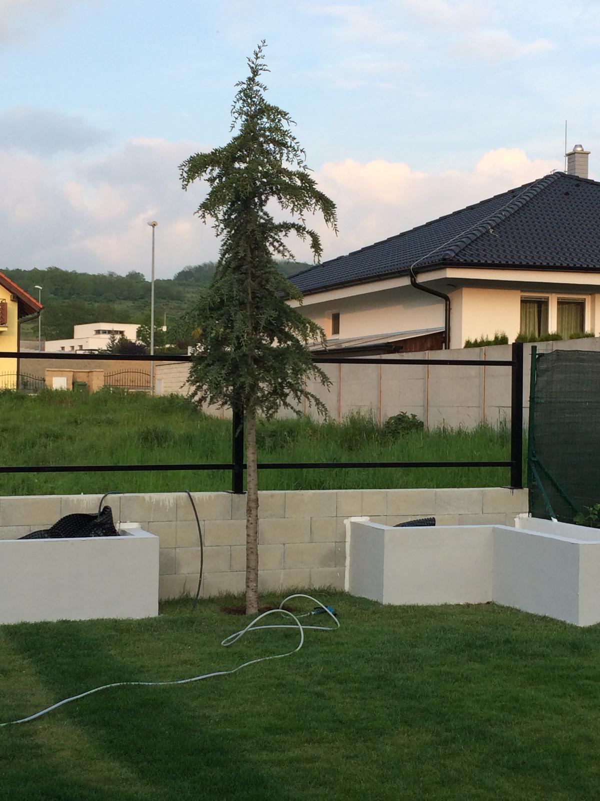 Zahradka - Céder na mieste.