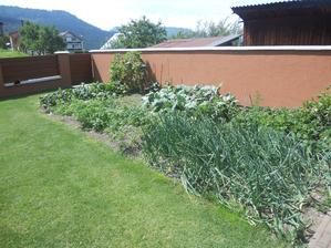 ...naša záhradka...