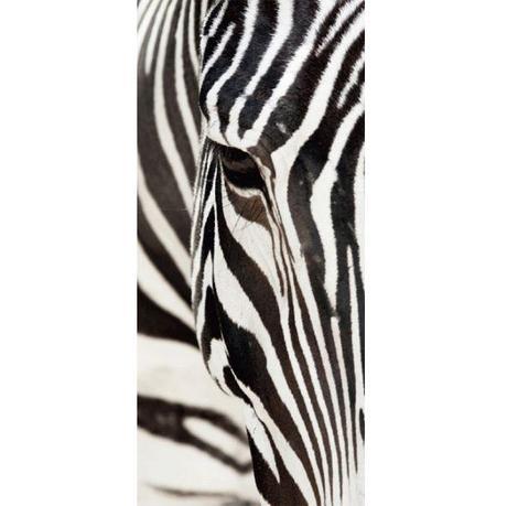 Tapeta Zebra - Obrázok č. 1