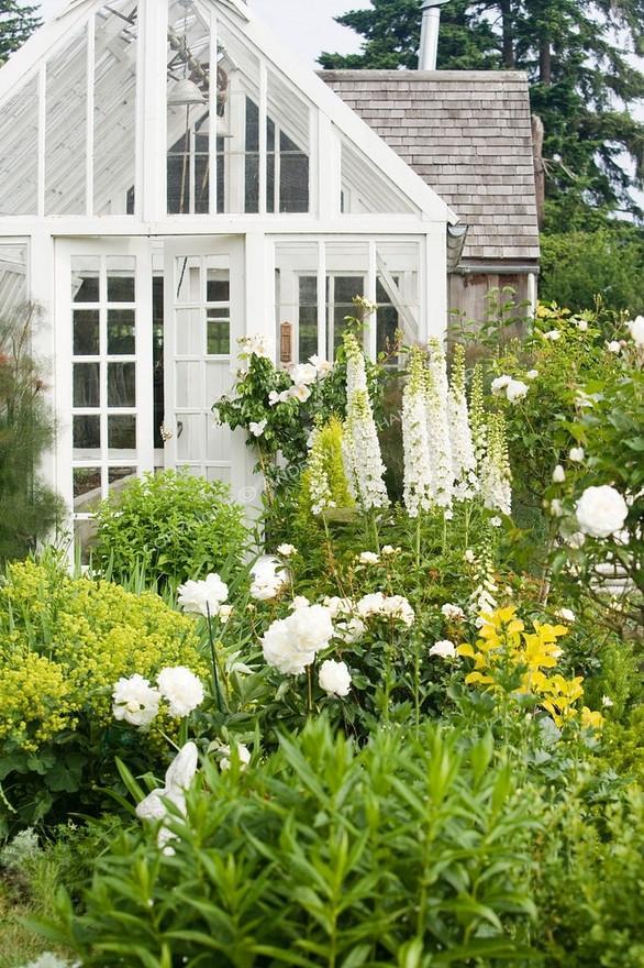 Anglická zahrada - osazovací plány - bílé pivoňky a delphinium