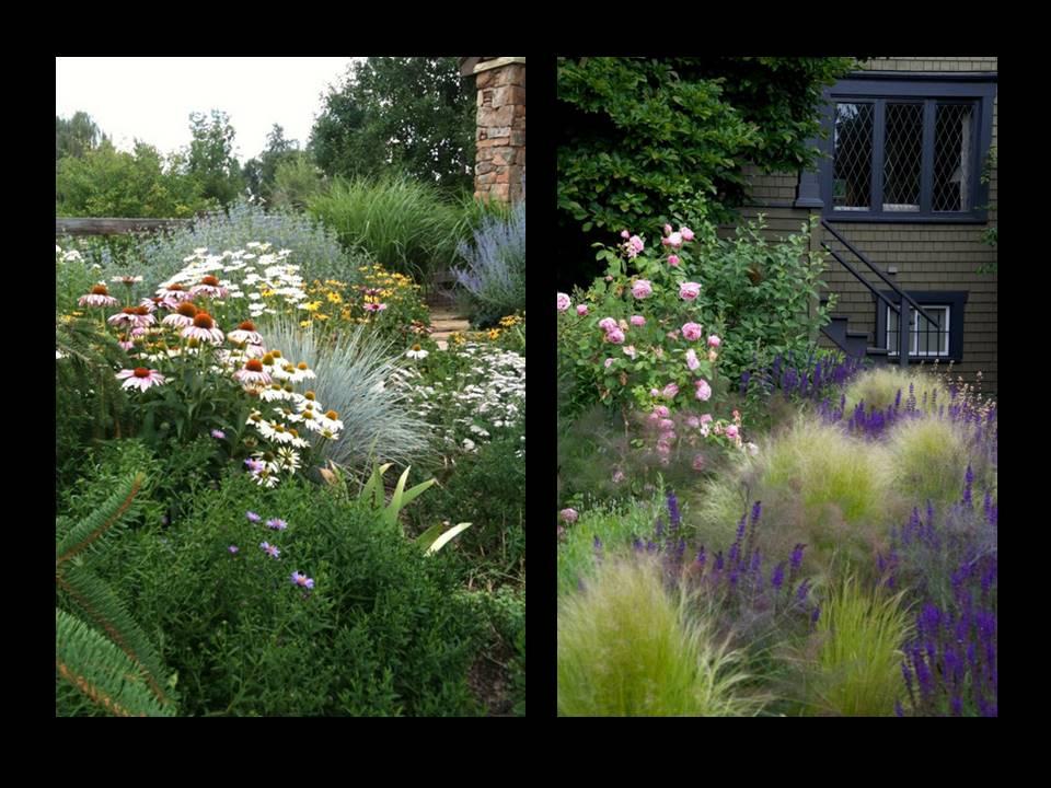 Anglická zahrada - osazovací plány - vlevo: Echinacea 'White Swan', Leucanthemum x superbum 'Alaska', Alchilea millefolium; vpravo:Stipa tenuissima, 'Foeniculum vulgate 'Purpureum'