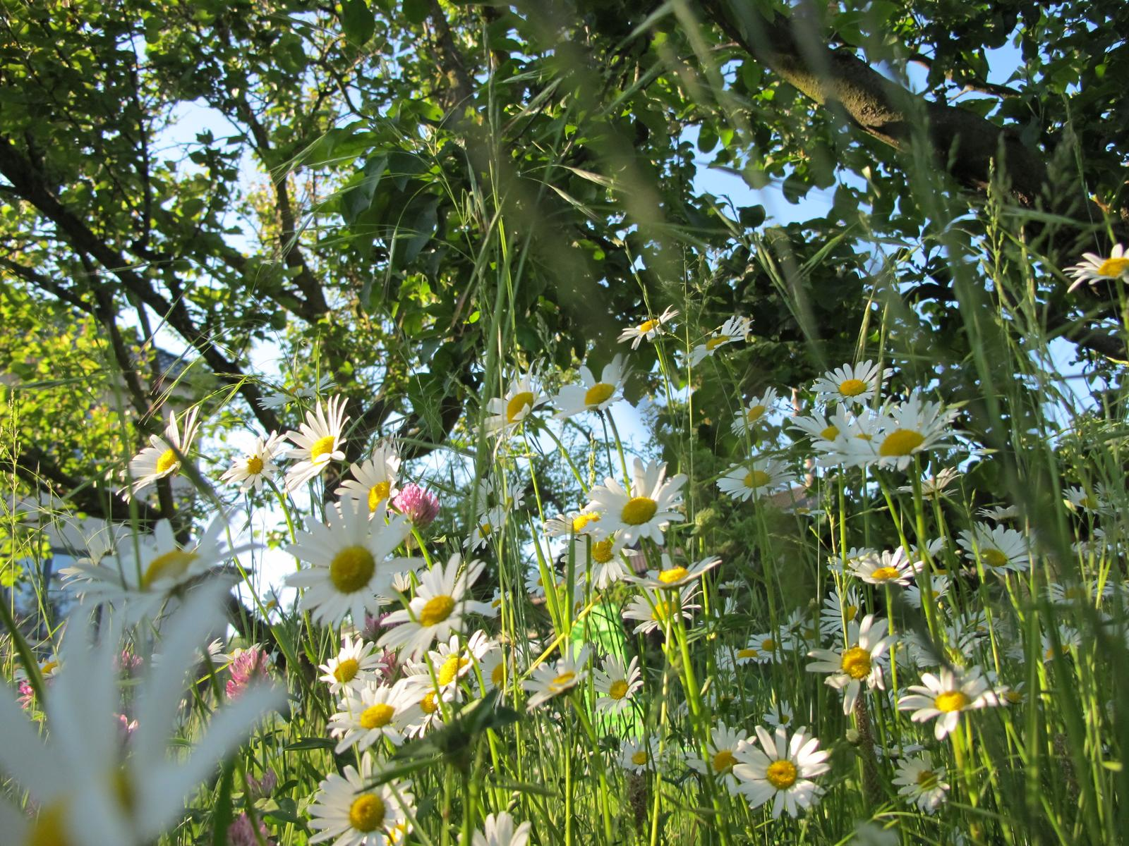 Anglická zahrada - osazovací plány - Obrázek č. 1