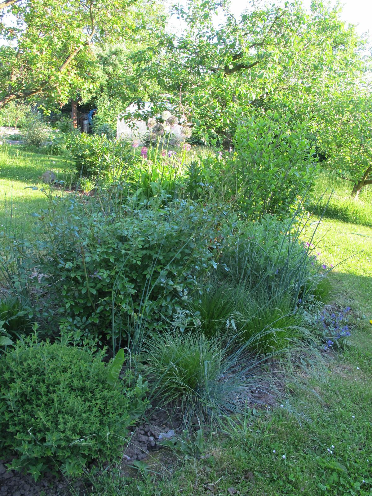 Anglická zahrada - osazovací plány - Obrázek č. 2