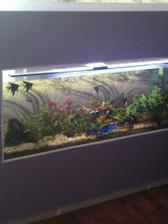Naše 300-litrové akvárium