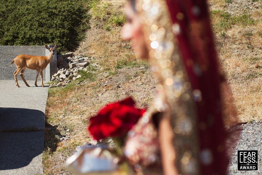 Fotoseriál 8 – Zvířata a svatba :-) - Obrázek č. 2
