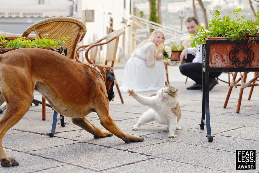 Fotoseriál 8 – Zvířata a svatba :-) - Obrázek č. 3