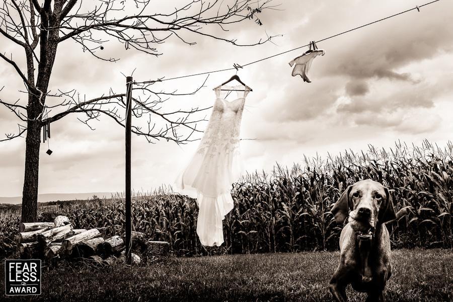 Fotoseriál 8 – Zvířata a svatba :-) - Obrázek č. 13