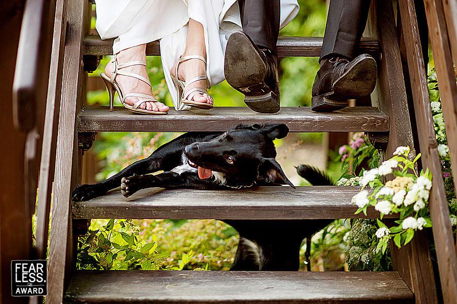 Fotoseriál 8 – Zvířata a svatba :-) - Obrázek č. 16