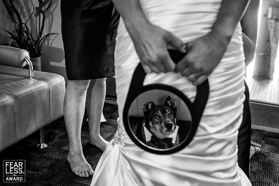 Fotoseriál 8 – Zvířata a svatba :-) - Obrázek č. 21