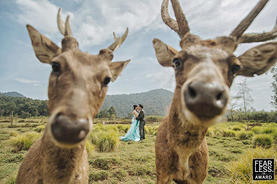 Fotoseriál 8 – Zvířata a svatba :-) - Obrázek č. 22