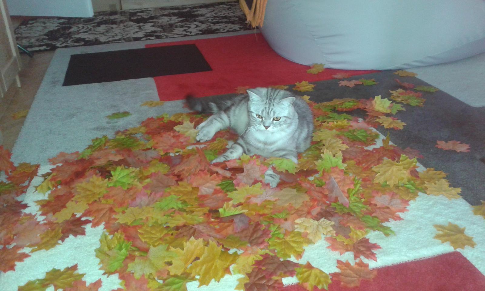 Co uz mame .. :-) - Jesen priamo v obyvačke.. listy sa porozsypaju po stole okolo vaz ..:D