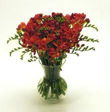 tak nakonec nejspis zvitezi kytice cervenych frezii