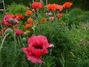 v desti jsme se prosli rozkvetlou zahradou:-) Za tyden snad bude lepsi pocasi!