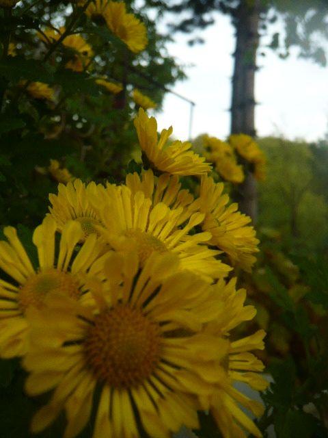 Jeseň u nás na Chalupovej :-) - Obrázok č. 5