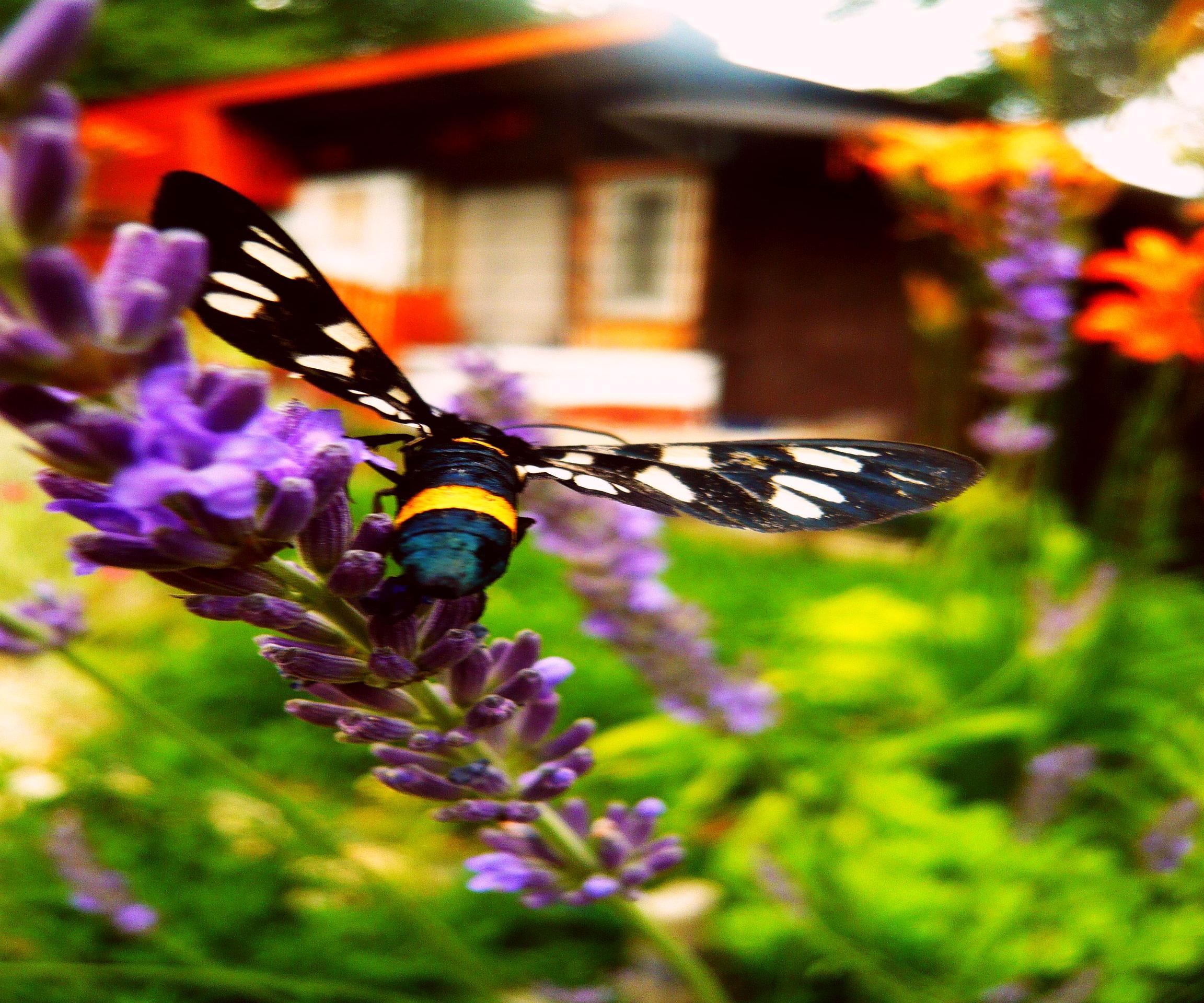 Môj rok v záhrade :-) - Obrázok č. 3