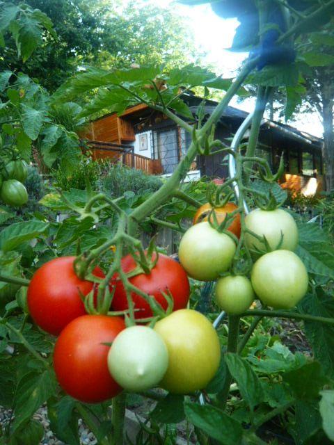 Môj rok v záhrade :-) - Obrázok č. 17