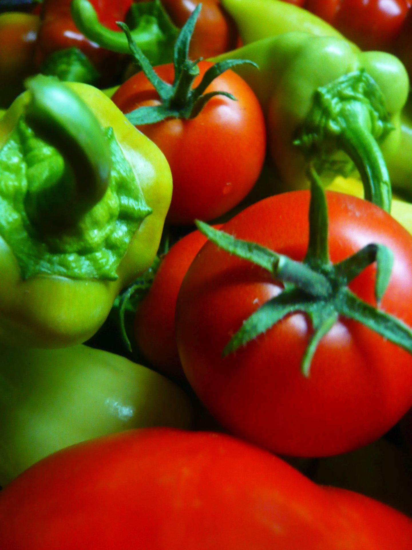 Papriky máme na záhrade... - Obrázok č. 4
