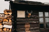 Dekorativní busta jelena,
