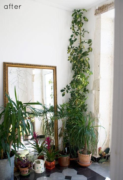 Máme rádi pokojovky aneb květiny v bytě-domě - Obrázek č. 3