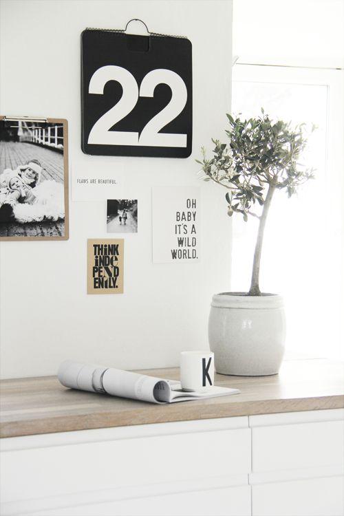 Máme rádi pokojovky aneb květiny v bytě-domě - Obrázek č. 4
