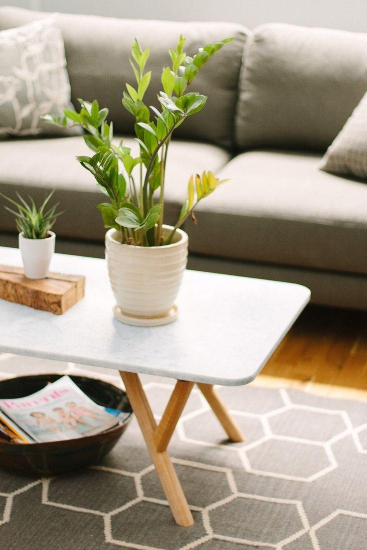 Máme rádi pokojovky aneb květiny v bytě-domě - Obrázek č. 11
