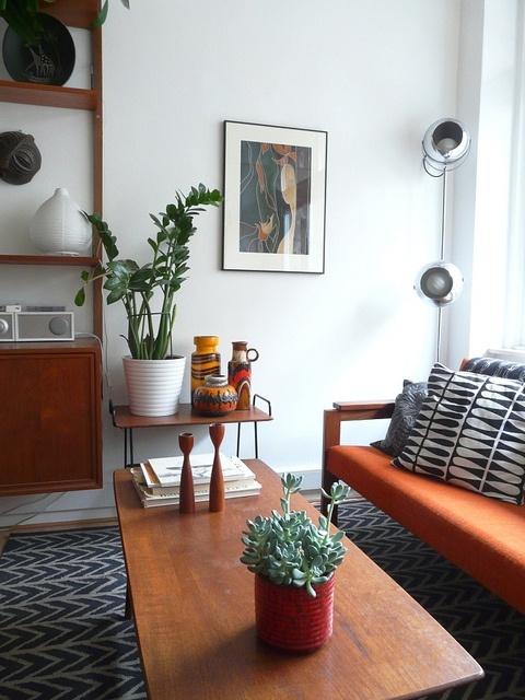 Máme rádi pokojovky aneb květiny v bytě-domě - Obrázek č. 15