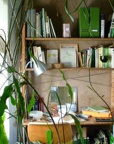 Máme rádi pokojovky aneb květiny v bytě-domě - Obrázek č. 17