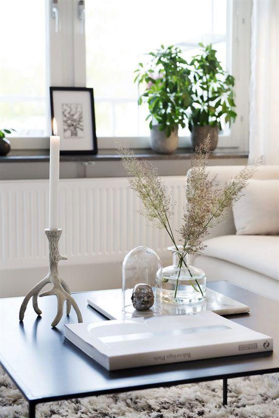 Máme rádi pokojovky aneb květiny v bytě-domě - Obrázek č. 20