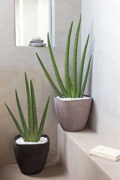 Máme rádi pokojovky aneb květiny v bytě-domě - Obrázek č. 21