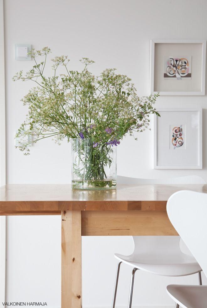 Máme rádi pokojovky aneb květiny v bytě-domě - Obrázek č. 24