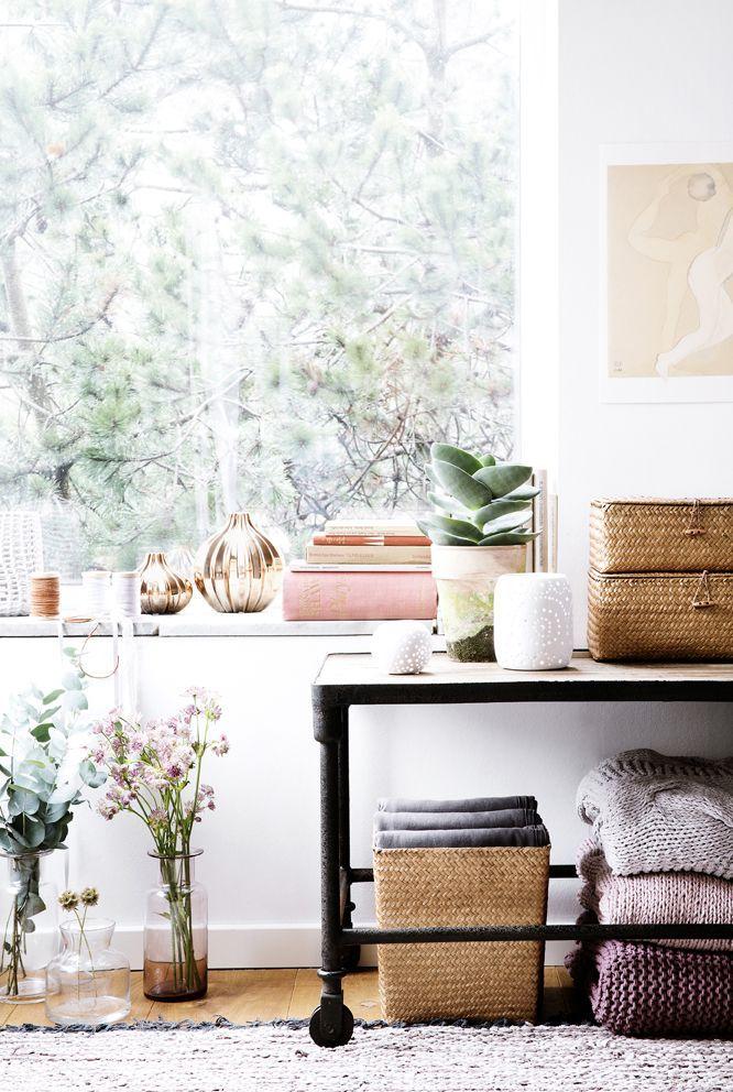 Máme rádi pokojovky aneb květiny v bytě-domě - Obrázek č. 34