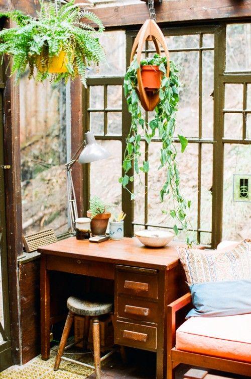 Máme rádi pokojovky aneb květiny v bytě-domě - Obrázek č. 37