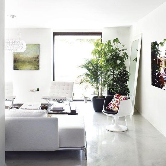 Máme rádi pokojovky aneb květiny v bytě-domě - Obrázek č. 38