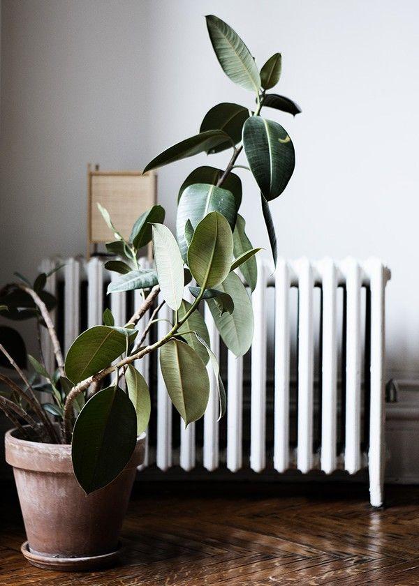 Máme rádi pokojovky aneb květiny v bytě-domě - Obrázek č. 42