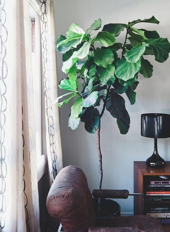 Máme rádi pokojovky aneb květiny v bytě-domě - Obrázek č. 44