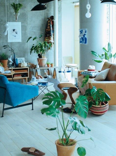 Máme rádi pokojovky aneb květiny v bytě-domě - Obrázek č. 45