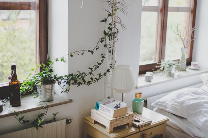 Máme rádi pokojovky aneb květiny v bytě-domě - Obrázek č. 48