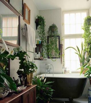Máme rádi pokojovky aneb květiny v bytě-domě - Obrázek č. 50