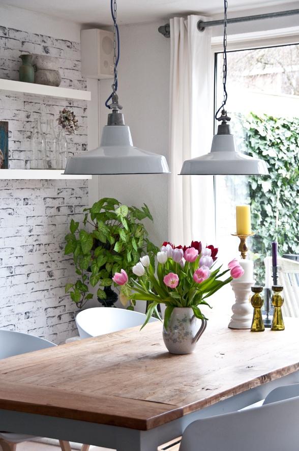 Máme rádi pokojovky aneb květiny v bytě-domě - Obrázek č. 56