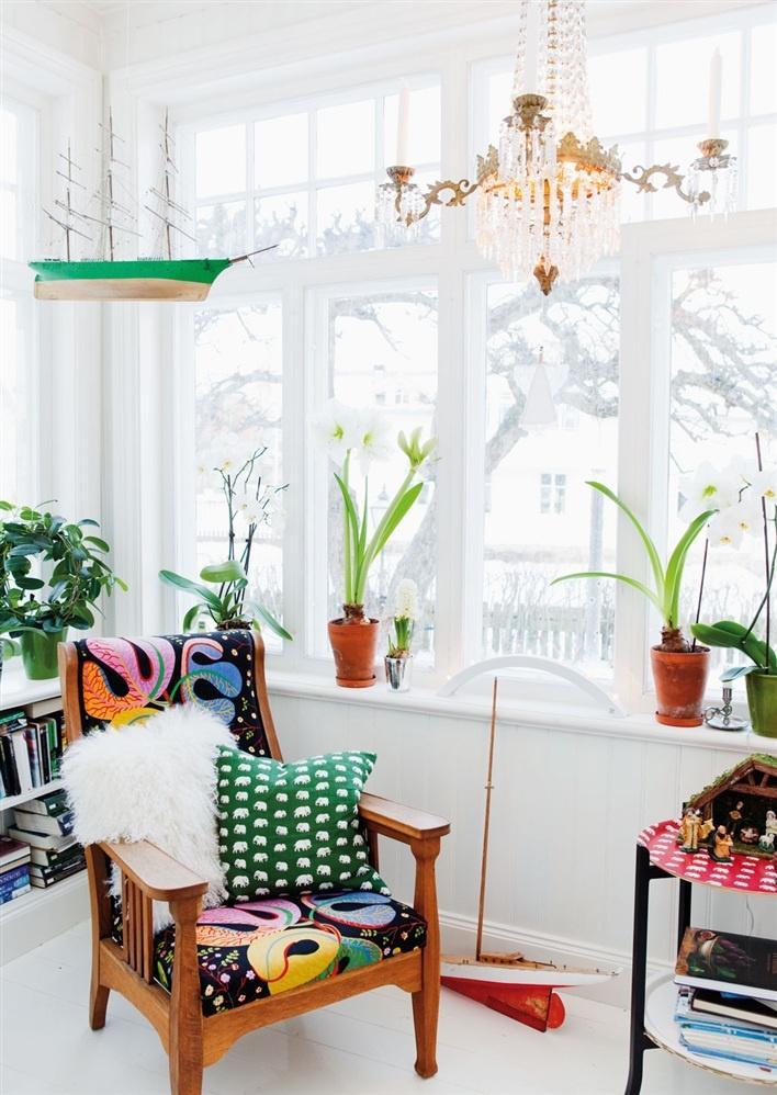 Máme rádi pokojovky aneb květiny v bytě-domě - Obrázek č. 57