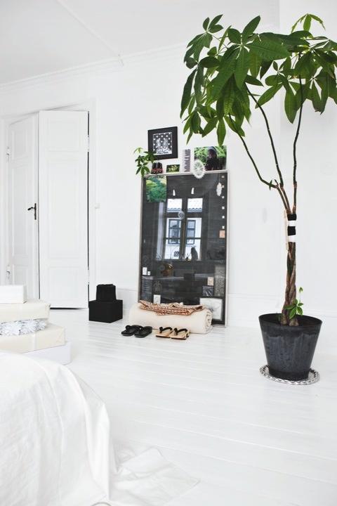 Máme rádi pokojovky aneb květiny v bytě-domě - Obrázek č. 60
