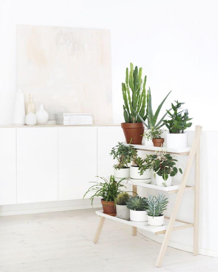 Máme rádi pokojovky aneb květiny v bytě-domě - Obrázek č. 61