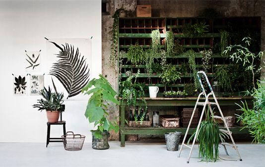 Máme rádi pokojovky aneb květiny v bytě-domě - Obrázek č. 63