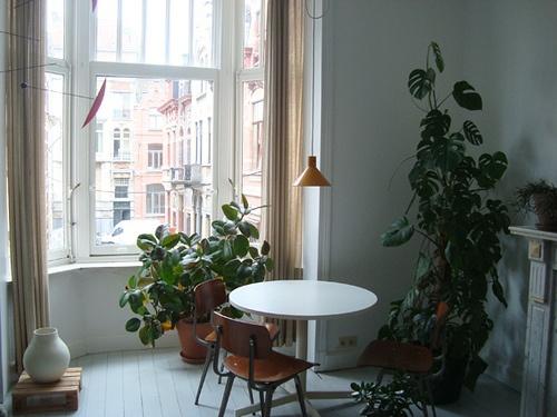 Máme rádi pokojovky aneb květiny v bytě-domě - Obrázek č. 64