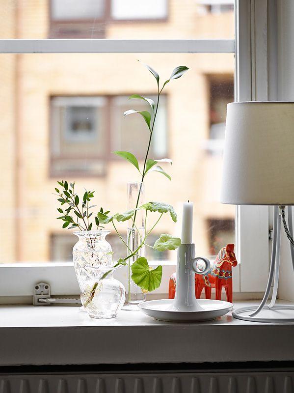 Máme rádi pokojovky aneb květiny v bytě-domě - Obrázek č. 69