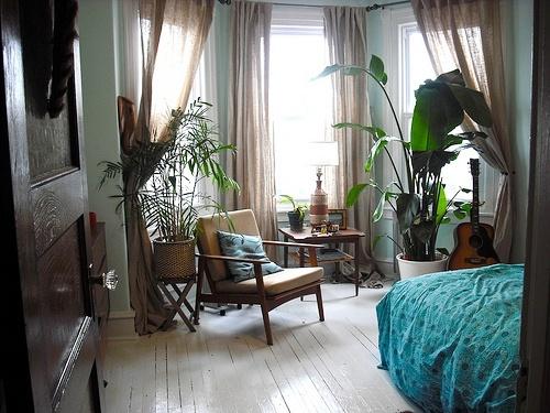 Máme rádi pokojovky aneb květiny v bytě-domě - Obrázek č. 71