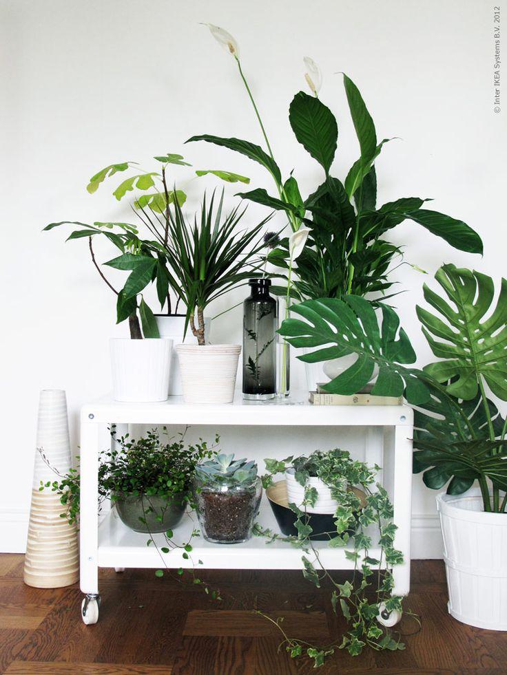 Máme rádi pokojovky aneb květiny v bytě-domě - Obrázek č. 72