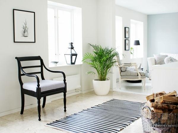 Máme rádi pokojovky aneb květiny v bytě-domě - Obrázek č. 78
