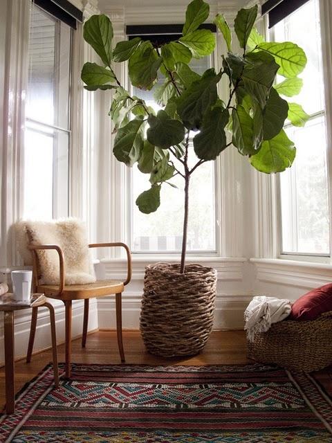 Máme rádi pokojovky aneb květiny v bytě-domě - Obrázek č. 79
